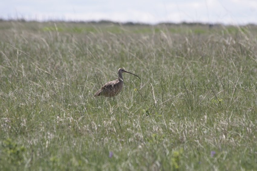 Birds & Grasslands