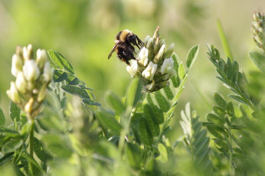 Pollinators & Honeybees